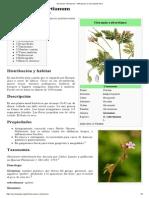 Geranium Robertianum - Wikipedia, La Enciclopedia Libre