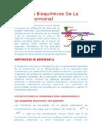 92592272-Aspectos-bioquimicos-de-la-accion-hormonal.docx