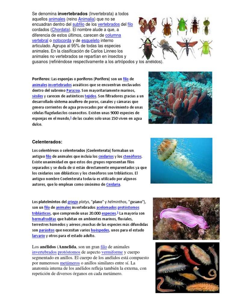 Clases de Invertebrados
