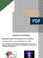 2A Absorción de Minerales -Cat Team-