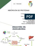 2A Absorcion de Proteinas -Blancanieves y Los Enanos