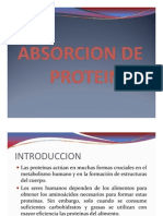 2b -Homeostasis Absorcion de Protein As- Las Chuchas Cuereras