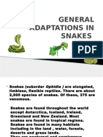 General Adaptations in Snakes