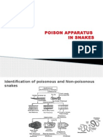 Poison Apparatus in Snakes