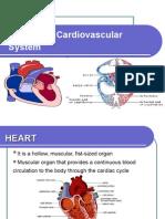 2 Cardiovascular System