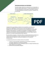 DESNATURALIZACIÓN DE LAS PROTEÍNAS.docx