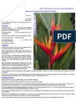 Heliconia Golden Torch Adrian - Buyers Info