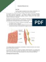 Resumen Músculo Liso.docx