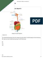 Aparato Digestivo - Wikipedia, La Enciclopedia Libre