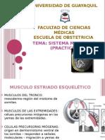 Sistema Muscular - Embriologia