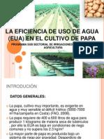 Eficiencia Del Uso Del Agua en El Cultivo de La Papa