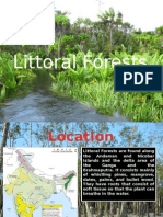 Mountainous and Littoral Forests