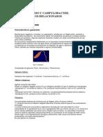 21. Vibrio.pdf