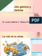 Información génica y proteínas