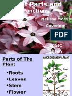 Powerpoint (3) Plant Parts