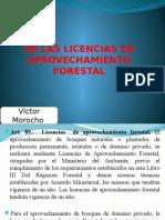 De Las Licencias de Aprovechamiento Forestal