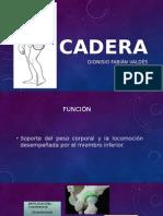 Movimientos, músculos y Goniometria del miembro inferior