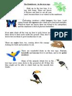 rainforest information cards and worksheets