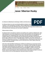 Hunderasse Siberian Husky