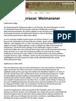 Hunderasse Weimaraner