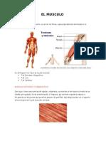 El Musculo y El Control Neuromuscular
