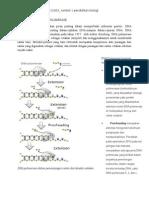 amalia tristiana_ 4401412063_STRUKTUR DARI DNA POLIMERASE.docx