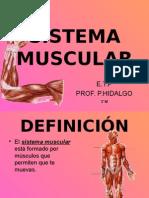 s.muscular