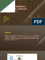 t3-Lipidos y Membranas