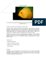 Golden Severum