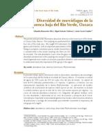 Diversidad de Murcielagos Oaxaca