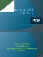 CURS 7 Arbori II pp