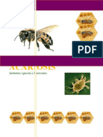 Acariosis