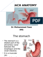stomach-100331081026-phpapp01