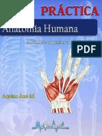 Guía de Miembro Superior e Inferior PDF