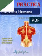 Guia de Cuello y Tronco PDF