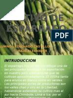 Cultivo de Esparrago.pp