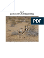 Sonoran Pronghorn Draft Recovery Plan
