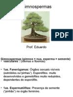 gimnospermaseangiospermas-110910152631-phpapp02