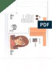 NICOLETA  EMA WOLF.pdf