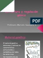 Estructura Regulacion Genica IV Medios Celula Genoma Organismo