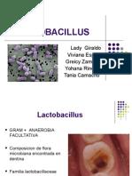 lactobacillus[1].ppt