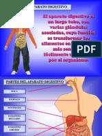 aparato-digestivo
