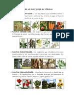 CLASES DE PLANTAS POR SU UTILIDAD.doc