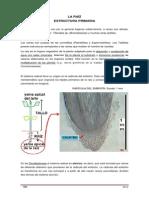 16._estructura_primaria_de_raiz