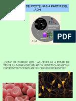 sintesis_proteinas.ppt