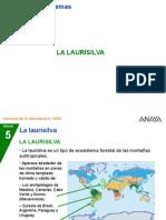 Laurisilva Canaria