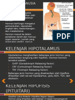 Patklin 4D Kel3 Hormon
