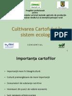 -Cultivarea cartofului in sistem ecologic.ppt