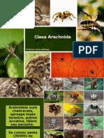 Clasa Arachnida