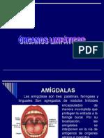 Organos Linfáticos